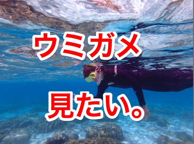沖縄・座間味の海でウミガメに挑む!